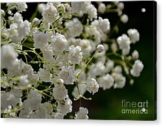 Acrylic Print featuring the photograph Gypsophilia by Scott Lyons