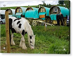 Gypsy Cob And Wagons Acrylic Print by Liz  Alderdice