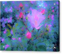 Gypsy Rose - Flora - Garden Acrylic Print by Susan Carella