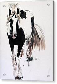 Gypsy Vanner Acrylic Print by Isabella F Abbie Shores FRSA