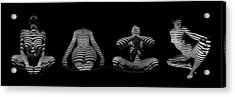 H Stripe Series One Sensual Zebra Woman Abstract Black White Nude 1 To 3 Ratio Acrylic Print