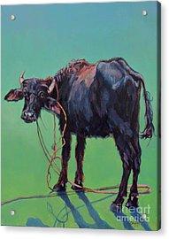 H2o Buffalo Acrylic Print