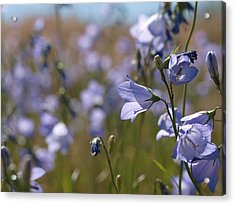 Acrylic Print featuring the photograph Harebells by Jenessa Rahn