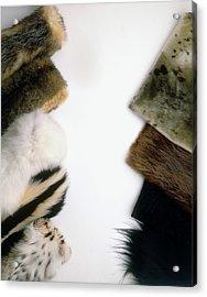 Hairseal Fur Acrylic Print by Dorling Kindersley/uig