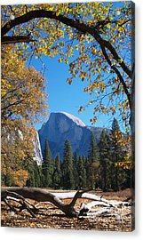 Half Dome In Yosemite Acrylic Print by Alex Cassels