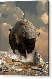 Half White Bison Acrylic Print