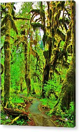 Hall Of Moss Acrylic Print by Benjamin Yeager