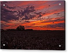 Acrylic Print featuring the photograph Halloween Dawn  by John Harding