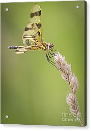 Halloween Pennant Acrylic Print by Ricky L Jones