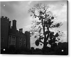 Hampton Court Tree Acrylic Print