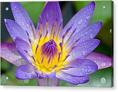 Hana Water Lily Acrylic Print by Hawaii  Fine Art Photography