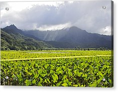 Hanalei Valley Taro Field Acrylic Print by Saya Studios