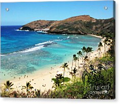 Hanauma Bay With Turtle Acrylic Print by Mindy Bench