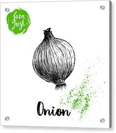 Hand Drawn Sketch Onion. Farm Fresh Acrylic Print