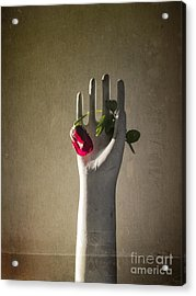 Hand Holding Rose Acrylic Print by Terry Rowe