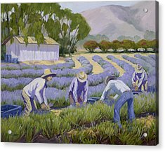 Hand-picked Lavender Acrylic Print