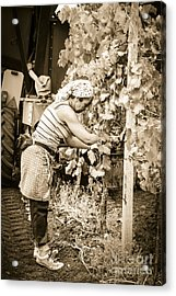 Hand Pickers Following The Mechanical Harvester Harvesting Wine  Acrylic Print