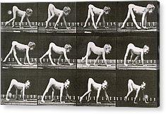 Handicapped Boy Crawling Acrylic Print by Eadweard Muybridge