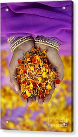 Hands Holding Flower Petals Acrylic Print by Tim Gainey
