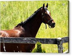 Handsom Horse Acrylic Print