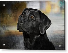 Acrylic Print featuring the photograph Handsome Black Lab by Eleanor Abramson