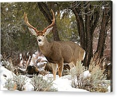Handsome Buck Acrylic Print by Donna Kennedy