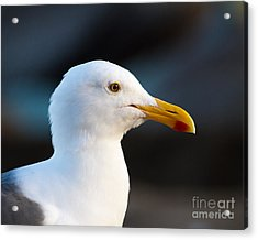 Acrylic Print featuring the photograph Handsome Gull by Dale Nelson