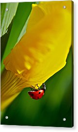 Hang On Acrylic Print by Bill Owen