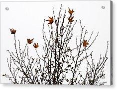 Hangers On Acrylic Print by Dan Holm