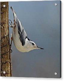 Hangin Around Acrylic Print