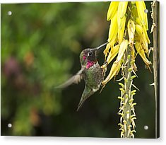 Hangin For A Meal Acrylic Print