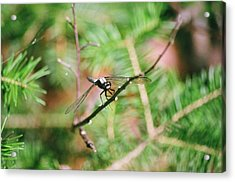 Acrylic Print featuring the photograph Hangin' Out by David Porteus