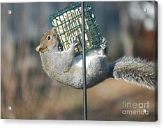 Acrylic Print featuring the photograph Hangin Out by Mark McReynolds
