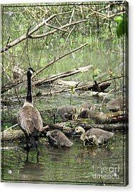 Hangin Out With Mom Acrylic Print by Sara  Raber