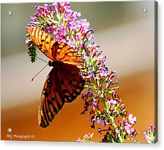 Hanging Butterfly Acrylic Print
