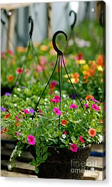 Hanging Flower Baskets Shallow Dof Acrylic Print by Amy Cicconi