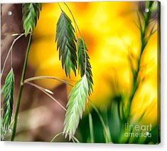 Acrylic Print featuring the photograph Hanging In by JRP Photography