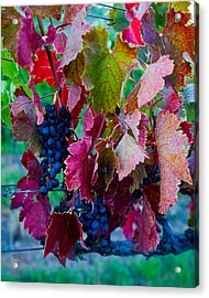 Hanging In There Acrylic Print