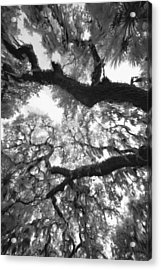 Acrylic Print featuring the photograph Hanging Moss by Bradley R Youngberg