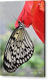 Acrylic Print featuring the photograph Hanging On #2 by Judy Whitton