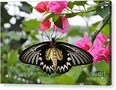 Hanging On Acrylic Print by Judy Whitton