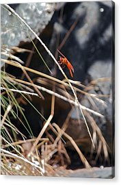Acrylic Print featuring the photograph Hanging On by Michele Myers
