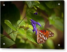 Acrylic Print featuring the photograph Hanging On by Penny Lisowski