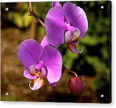 Hanging Orchids Acrylic Print by Kathi Isserman