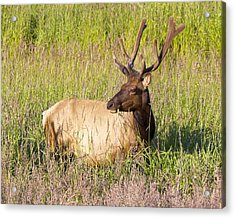 Acrylic Print featuring the photograph Hanging Out In The Meadow by Todd Kreuter