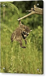 Hanging Out Acrylic Print by Jack Milchanowski
