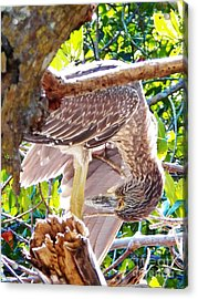 Hanging Out To Dry Acrylic Print by Judy Via-Wolff