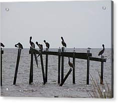 Acrylic Print featuring the photograph Hanging Out With Friends by Beth Vincent