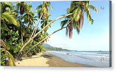 Hanging Palm Trees Acrylic Print by Tropigallery -