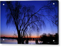 Hanging Tree Sunrise Acrylic Print by Metro DC Photography